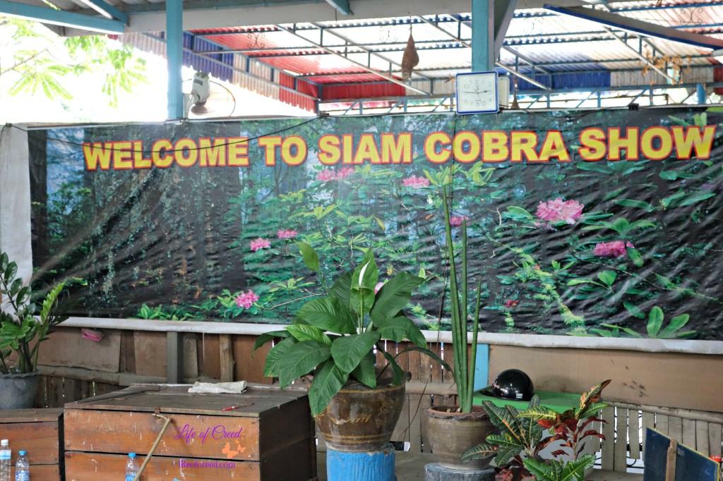 Siam Cobra Show, Phuket, Thailand, cobras, snakes