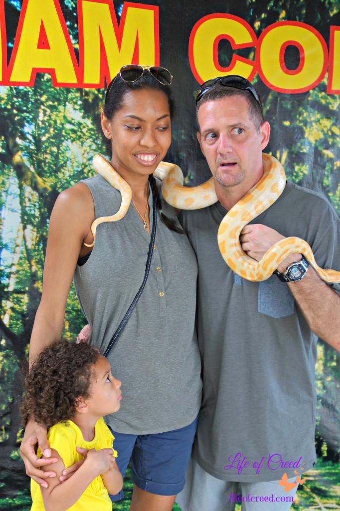 snake, python, phuket, thailand