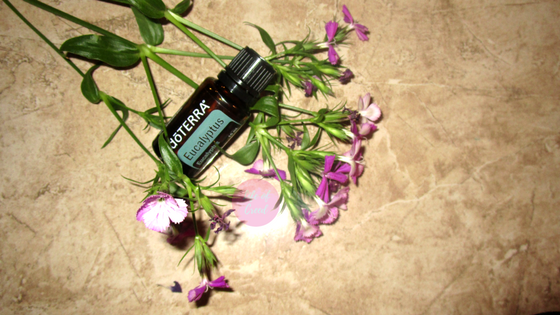 My favorite essential oil this month is Eucalyptus. It has been helpful for stuffy noses and congestion during the month.